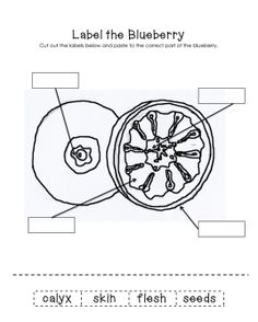 1000 images about blueberries for sal school theme on for Blueberries for sal coloring page