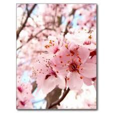 Afbeeldingsresultaat voor blossom postcards