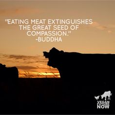 """""""Eating meat extinguishes the great seed of compassion."""" -Buddha  #vegan"""