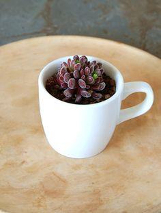 Ceramic mug x プベッケンス