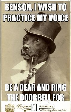 Old money dog on Pinterest | Old Money, Dog Memes and Dogs http://ibeebz.com