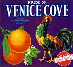 Ivanhoe Tulare County Pride of Venice Cove Rooster Chicken Orange Citrus Fruit Crate Label Art Print. $9.99, via Etsy.