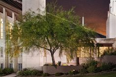 Robert A. Boyd Fine Art Gallery. Las Vegas Tree