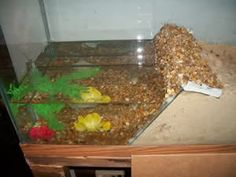 These are hermit crab pools. This isn't a DIY, but this article can give you… Hermit Crab Homes, Hermit Crab Tank, Hermit Crabs, Lizard Cage, Hermit Crab Habitat, Crabby Patties, Crab House, Class Pet, Crab Shack