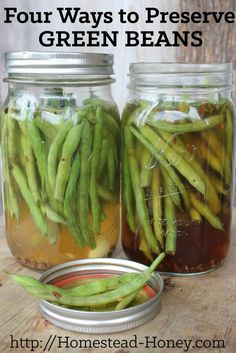 Green beans are a versatile crop to preserve for winter eating. Here are four ways to preserve green beans: Canning, Dehydrating, Fermenting, and Freezing.   Homestead Honey