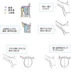 形の丸暗記で地盤を固める!肩の描き方!|イラストの描き方  鎖骨と肩のつながり    How to Draw Shoulders | Illustration Tutorial  The Role of the Clavicle