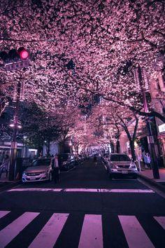 Yaesu Sakura Dori in Nihonbashi - Tokyo, Japan Era Edo, Tokyo Station, Japan Architecture, Aesthetic Japan, Special Pictures, Chicago Restaurants, Tokyo Japan, Okinawa Japan, Japanese Culture