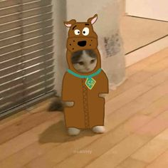 Cartoon Memes, Cat Memes, Cute Cats, Funny Cats, Arte Emo, Anime Kitten, Cat Icon, Cat Dresses, Harry Styles Pictures
