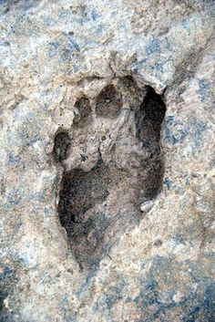 This fossil footprint found near Ileret, Kenya, is about 1.5 million years old. These footprints are the oldest ever found of the human genus.