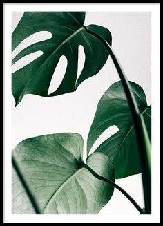 Botanical posters and prints | Prints with plants and flowers | Desenio