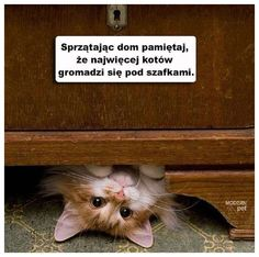 Lemur, Best Memes, Crazy Cats, Funny Animals, Lol, Laughing, Facebook, Quotes, Historia