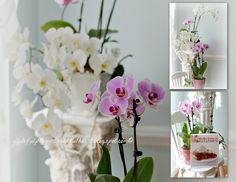 Orchids New Theme, Orchids, Glass Vase, Product Launch, Gardening, Flowers, Plants, Home Decor, Decoration Home