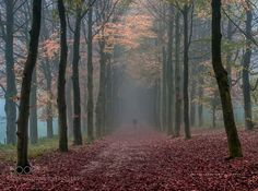 'walking the dog'.. by ChrisHornung. Please Like http://fb.me/go4photos and Follow @go4fotos Thank You. :-)
