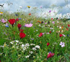 bunte Blumenwiese von Zauberhaft