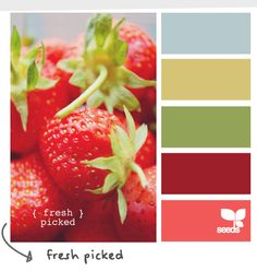 Color Palette Strawberries