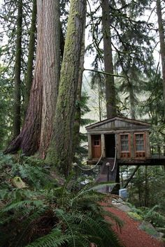 Forget HGTV, Live In A Tree! Animal Planet's 'Treehouse Masters' Premieres This Month - Architizer: