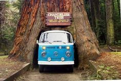 Sequoia National Park, California- 2 1/2 hours North of Los ...