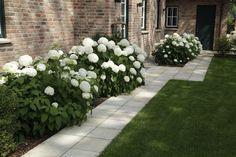 Die große Gruppe der Hortensien eröffnet dem Gartengestalter viele Möglichkeiten. Hier sei die Rispenhortensie, zum Beispiel Hydrangea paniculata Grandiflora mit ihren großen cremefarbenen Blütenri…