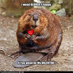 Beaver Valentine from Worth a Dam @ martinezbeavers.org