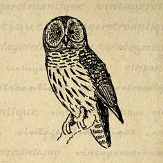 Digital Owl Graphic Image Antique by VintageRetroAntique on Etsy