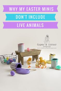 Why I don't use live animals in my Easter Mini Sessions by Gypsy's Corner Photography Buffalo NY