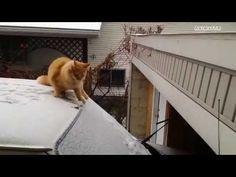 Uzun Atlama Denemesi ( Şapşi Kedi )