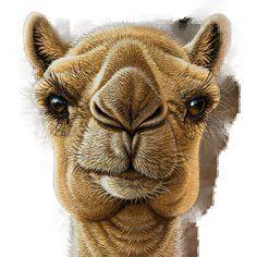 Président Ali Conquerre's profile picture