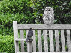 David Newby, 64, an architect, from Cumbria'I was sat in my front room when I noticed this owl and blackbird perched together on a bench in my front garden. I'd just bought a new camera, a Nikon P900 and fortunately had it in my hands at the time so seized the opportunity to take this photograph. I like it because it looks like the blackbird is talking to the owl'