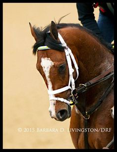 Rest in peace, DANZIG MOON...such a gorgeous and talented colt. A heartfelt condolences to his connections. - photo, Barbara D Livingstone