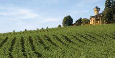 Vineyard | Friday Night Wine Down #192