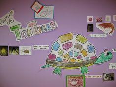 Actividades para el primer ciclo de Educación Infantil: Proyecto las tortugas…