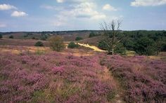 Nationaal Park De Hoge Veluwe, The Netherlands