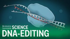 Carl Zimmer explains the CRISPR DNA editing system in 90 seconds