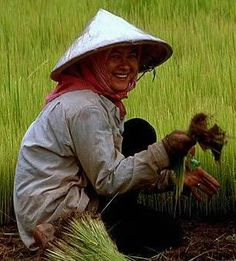 97 Best African Hats   Asian Rice Hats images  60736f293e1