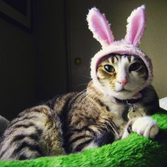 Pin for Later: 70+ Kitty Costumes That You Will Absolutely Love — but Your Cat Will Probably Hate Bunny Rabbit