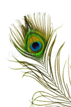 Find Detail Peacock Feather Eye On White stock images in HD and millions of other royalty-free stock photos, illustrations and vectors in the Shutterstock collection. Peacock Feather Tattoo, Feather Tattoo Design, Owl Tattoo Design, Feather Art, Feather Tattoos, Bird Tattoos, Peacock Feathers, Tattoo Designs, Peacock Drawing