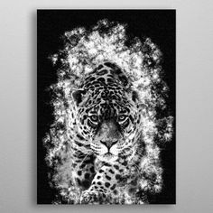 The leopard (Panthera pardus) is one of the five species in the genus Panthera, a member of the Felidae metal poster