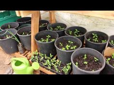 Seed Starting Greenhouse, Seed Starting in containers in a green house - Its the beginning of spring, I have started seeds in Container gardening in my green. Greenhouse Growing, Greenhouse Plans, Container Gardening, Gardening Tips, Plant Watering System, Greenhouse Supplies, Greenhouse Wedding, Plant Needs, Seed Starting