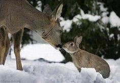 ... au pays des lapins | Photographe : Tanja Askani