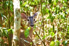 Our park is home to rare animals that roam the jungles of Mexico http://aktun-chen.com/