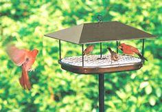 Greatest Bird Feeders - Champion Squirrel-Blocker Platform Feeder $85.70