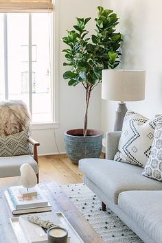 Go Green - An Affordable Scandi Beach House Reno You Have To See To Believe - Photos