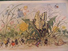 Tautröpflein Blinke Blanks Reise (Hanna Freimann; 1946; Fritz Baumgarten) rar!! | eBay