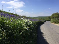 Along the roadside from Strete in Spring