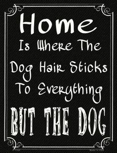 Home Where The Dog 9 - Funny Dog Quotes - Home Where The Dog 9 x 12 Metal Parking Sign The post Home Where The Dog 9 appeared first on Gag Dad. Dog Quotes Funny, Funny Dogs, Funny Animals, Funny Memes, Funny Dog Signs, Diy Funny, Dog Memes, Sweet Dog Quotes, Boxer Quotes