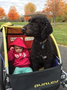 The Anderson family out for a fall ride. Biking With Dog, Family Outing, Have Fun, Cycling, Bike, Pets, Bicycles, Fall, Trailers