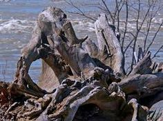 driftwood images - Google Search