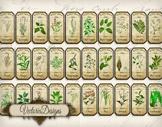 Mini Herbal Apothecary Bottle Labels 2 x 1 inch by VectoriaDesigns