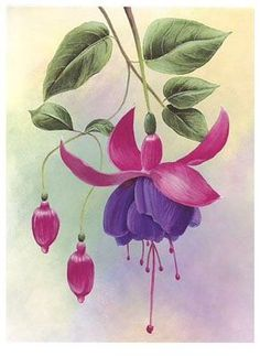 Flowers– among life's little satisfactions Watercolor Cards, Watercolour Painting, Watercolor Flowers, Painting & Drawing, Art Floral, Fuchsia Flower, Fabric Painting, Botanical Prints, Flower Art