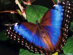Банк Обоев: обои Бабочка с цветными крыльями на листе дерева, фото - Обои для рабочего стола Бабочка с цветными крыльями на листе дерева фото - Раздел обоев: (бабочки)